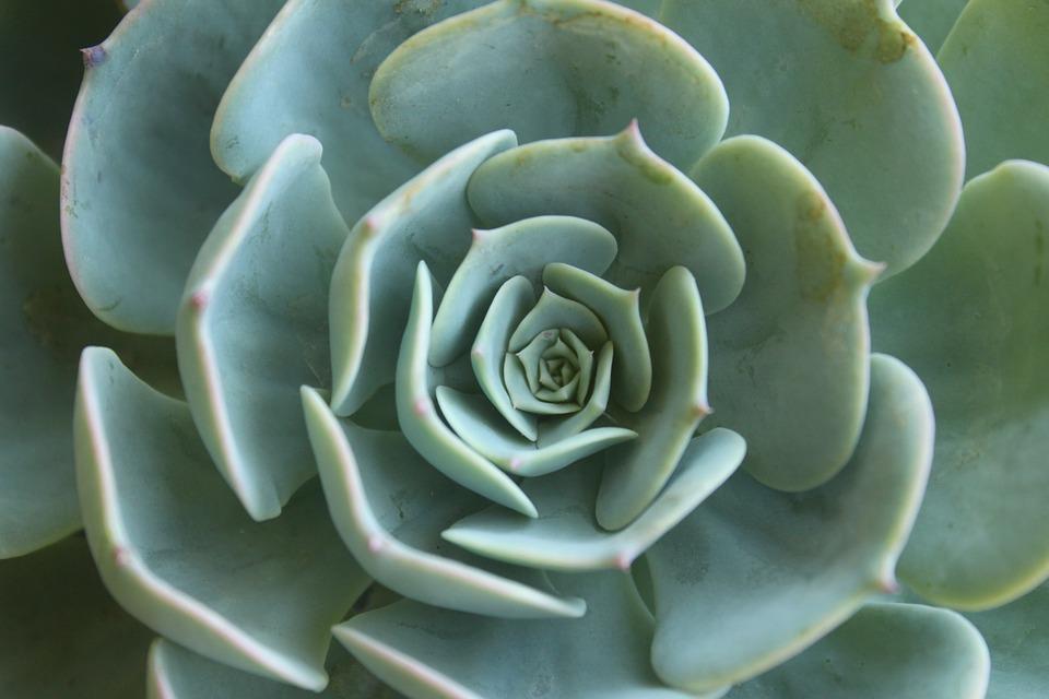 Heilige Geometrie, Blume des Lebens, Goldener Schnitt